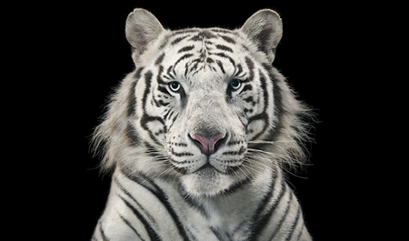 More Than Human Tim Flach (Hasselblad presents)